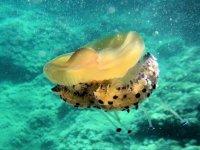 Attivita diving