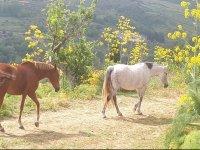 cavalli liberi