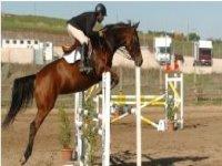 Sport equestri in agriturismo a Roma