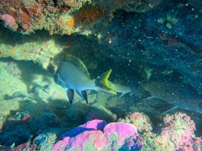 4 hours of diving Agropoli province of Salerno