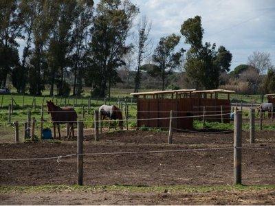 Greenfield Equitation