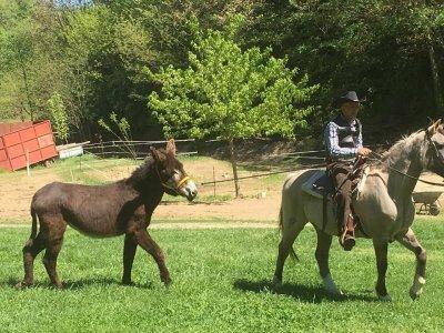 Donkey Ranch asd