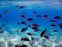 Excursion with diving and lunch Castellammare 5 hours