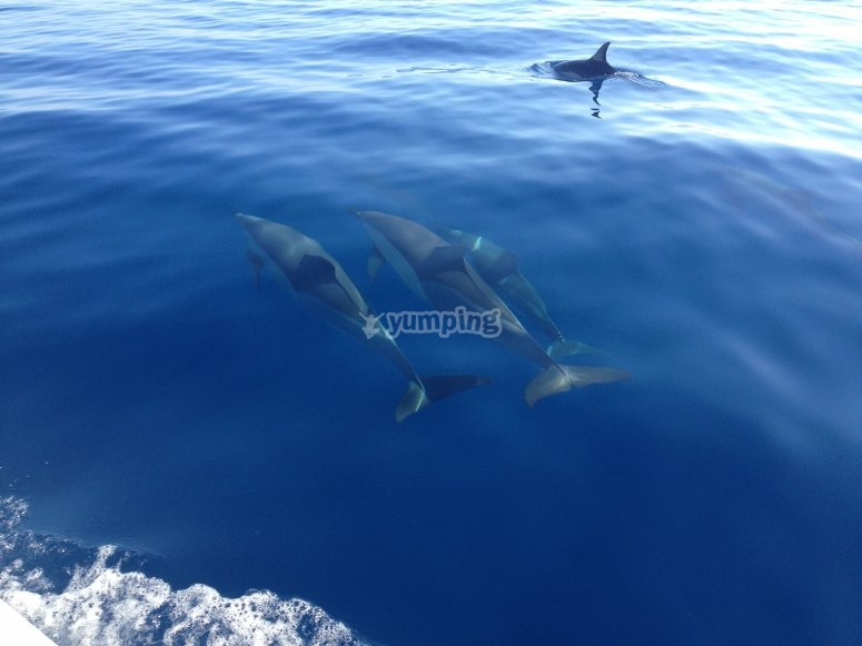 dolphins in the sea of sicily
