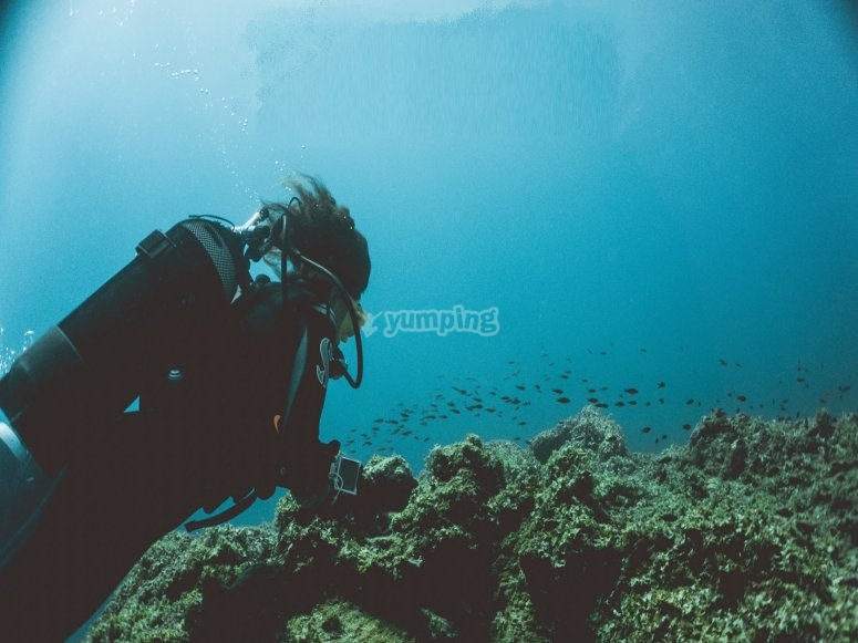 diving into the seabed