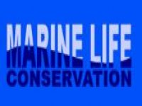 Marine Life Conservation Diving