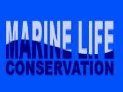 Marine Life Conservation Whale Watching