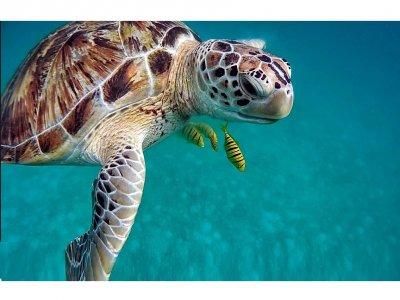 Snorkeling nelle Isole Tremiti di 2 ore