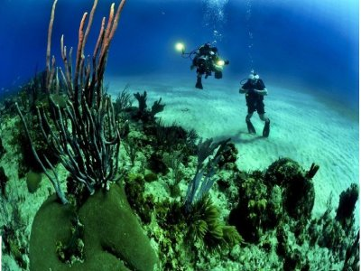 Full day Tremiti Islands dive