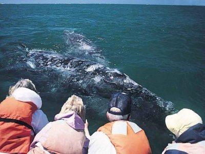 Gensys Nautica Whale Watching