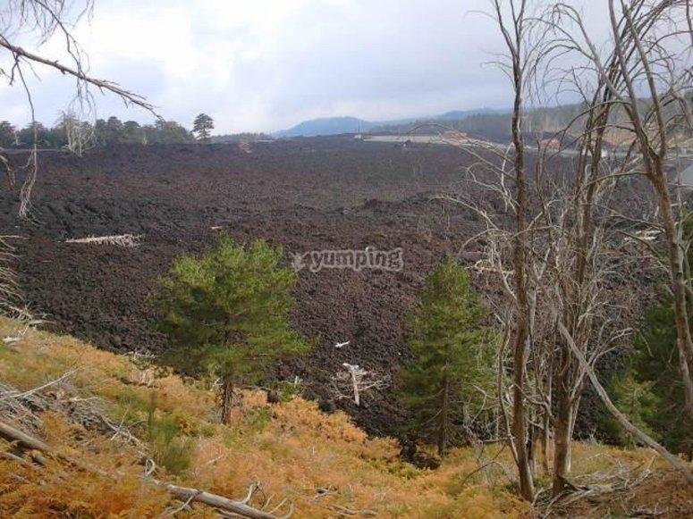 The vegetation around the volcano