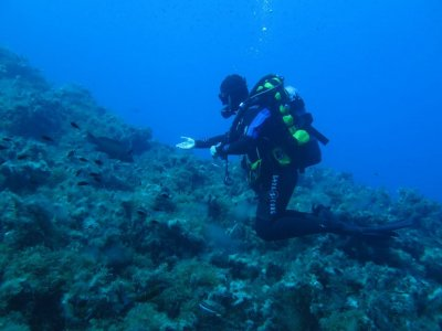 Single dive dive in Catania for 1 hour