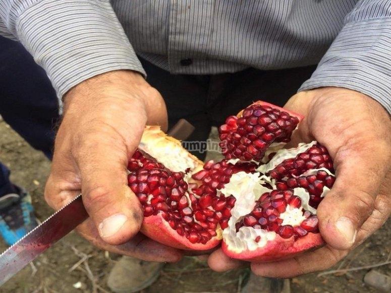 Tasting of fruits