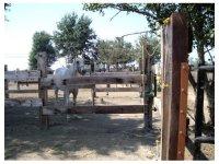Corsi e patenti equestri