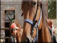 Passeggiata a cavallo ad Orvieto
