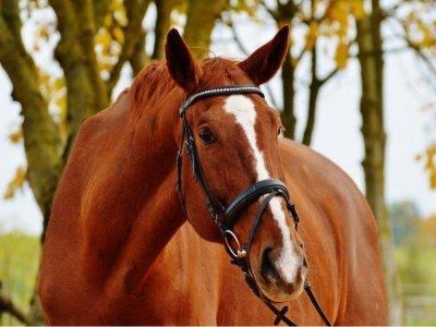 Passeggiata con cavallo in affido a Padule 1 ora
