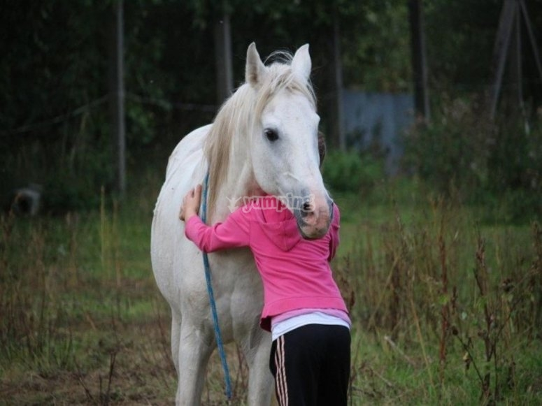 affinità con il cavallo