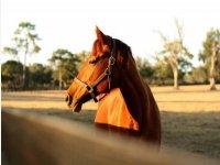Giornata con cavallo in affido a Padule