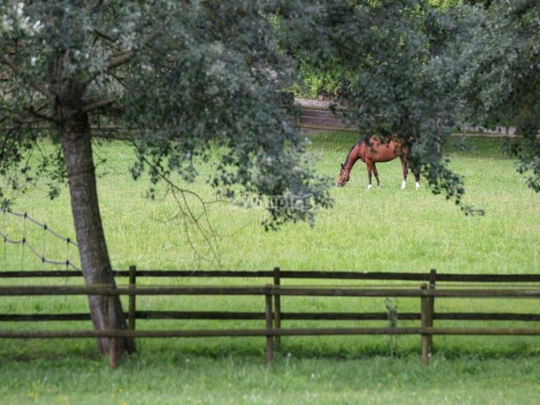 cavallo nel prato