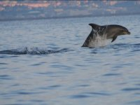 Surprises along the coasts sardines