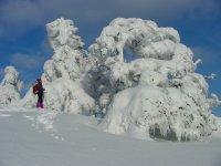 Snowshoeing among the loricati pines