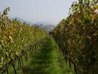 Vini dell 'etna
