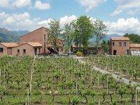 Vini Firriato
