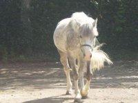 Pony school and horses