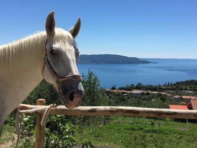 Escursione cavallo a Toscolano Maderno di due ore