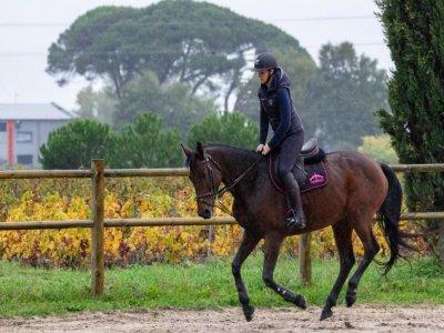 Lezione di equitazione ad Aprilia 1 ora