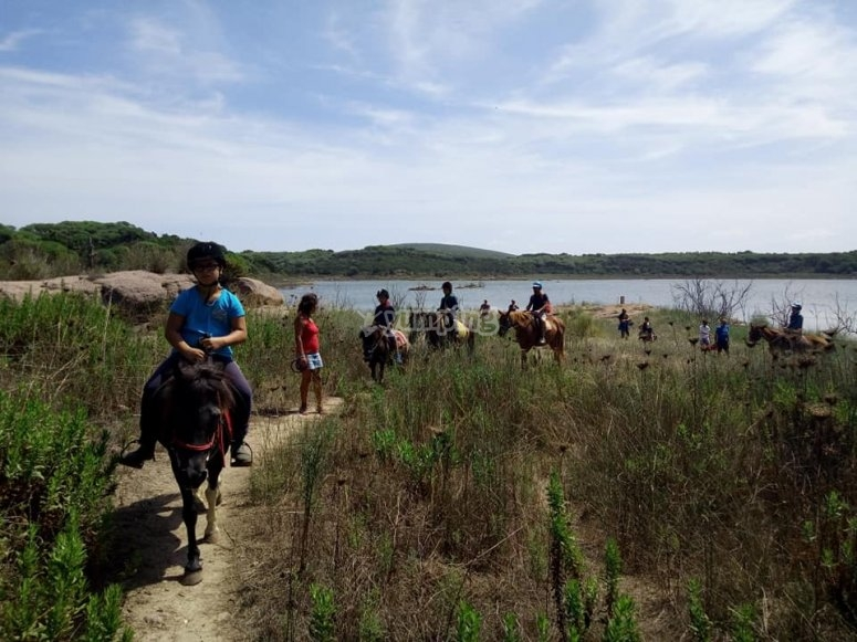 cavalli in azione