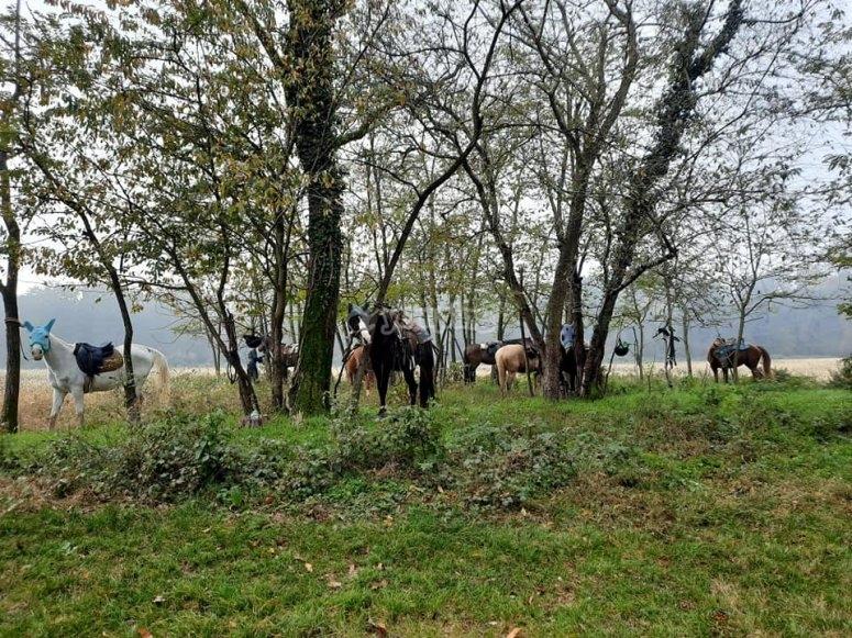 milan countryside