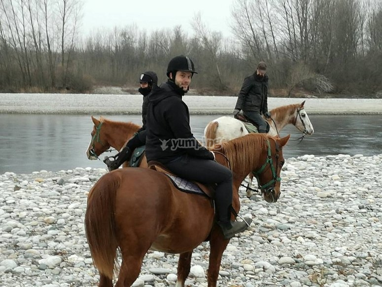 cavalli in inverno