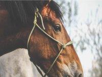 Passeggiata a cavallo a Vittorito di un'ora
