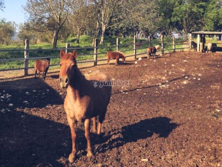 una bella giornata per uscire a cavallo