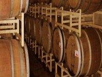 Barolo Wine Tour