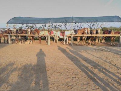 Passeggiata a cavallo a Porto Cesareo di 60 minuti
