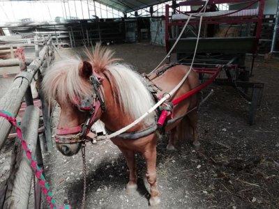 Horse-drawn carriage tour in Porto Cesareo 60 minutes