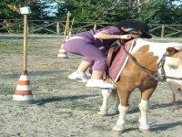 Ludo pony