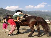 Attività pony
