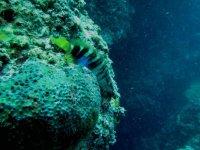 Avventure subacquee