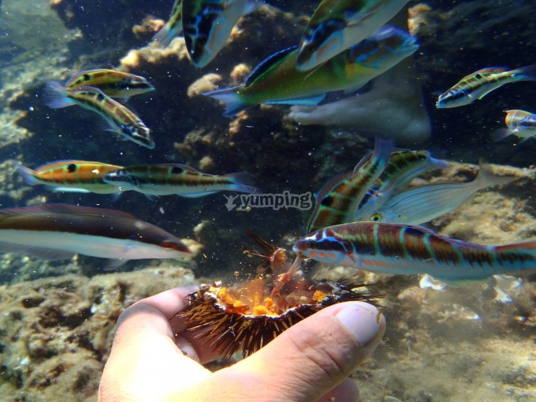 FISH that eat