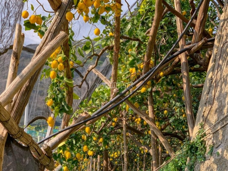 Path of the Lemons