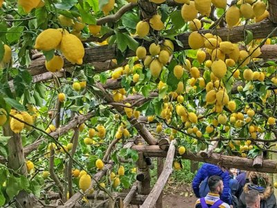 Private tour Path of the Lemons in Ravello 2H30