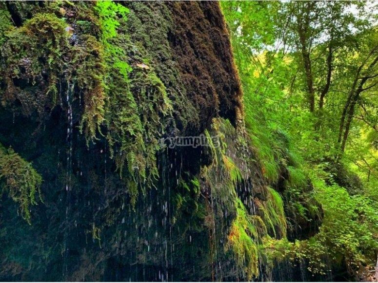 Uncontaminated vegetation
