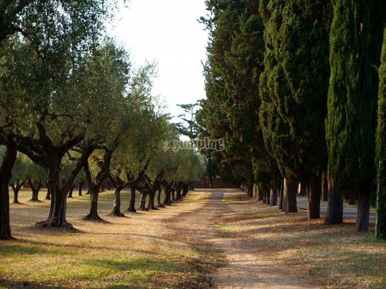 Sulla via Appia