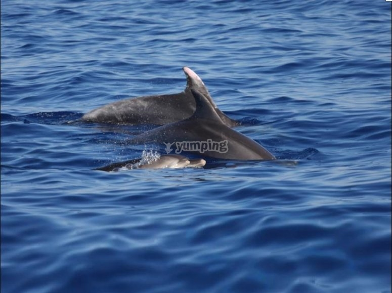 dolphins in the sea of sardinia