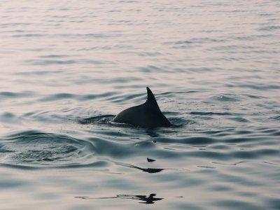 Aperitivo con delfini Golfo degli Aranci 1ora e 30