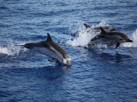 The dolphins that accompany us