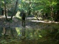 Un guado nel bosco